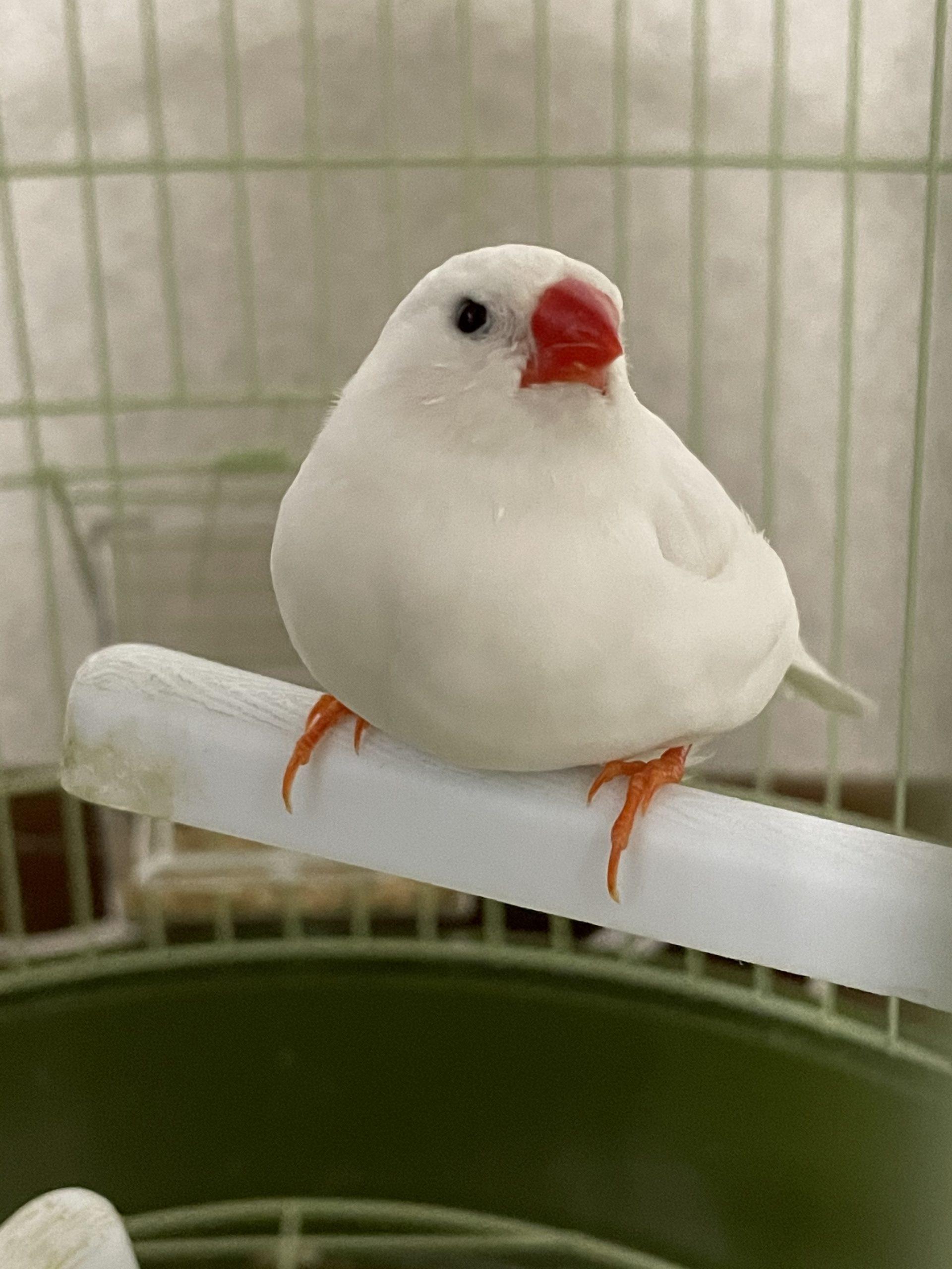 今日の小鳥