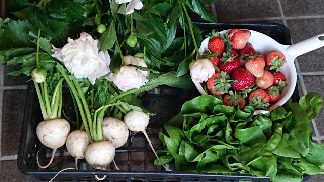 春野菜と花